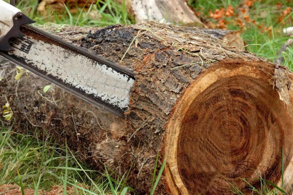 grand-prairie-tree-service-storm-damage-clean-up-1_orig