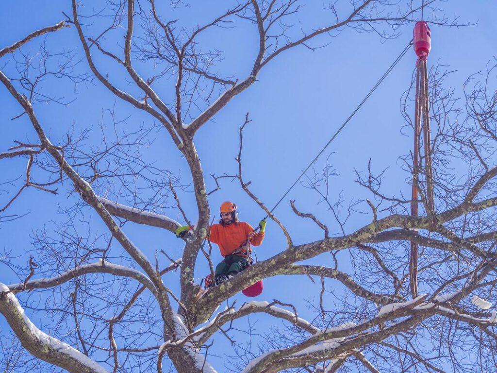grand-prairie-tree-service-storm-damage-clean-up-2_orig