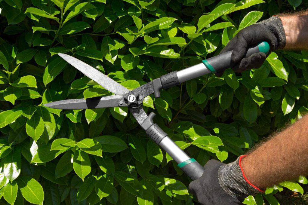 grand-prairie-tree-service-tree-brush-trimming-2_orig